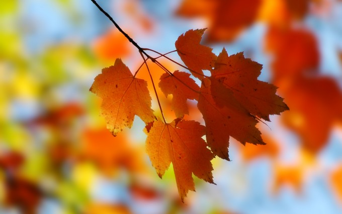 fall backgrounds free