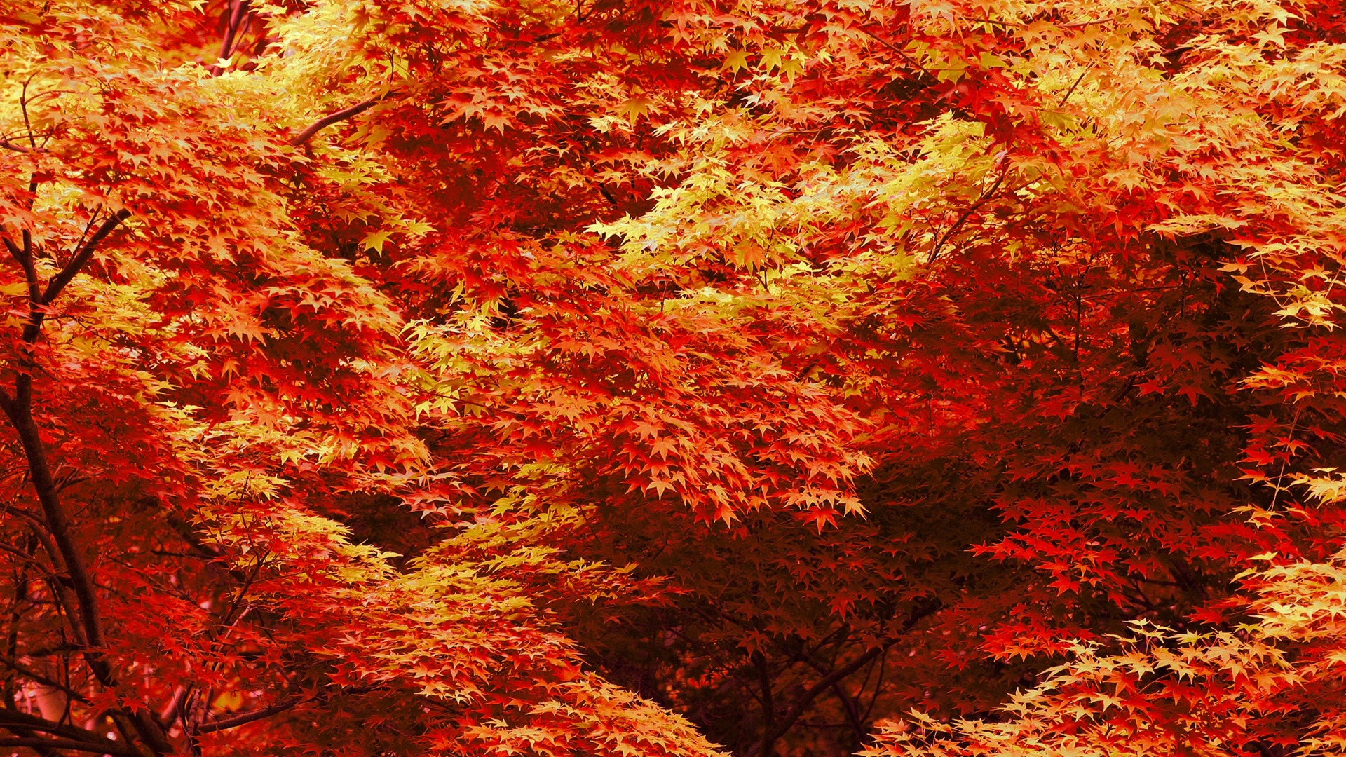 fall desktop background