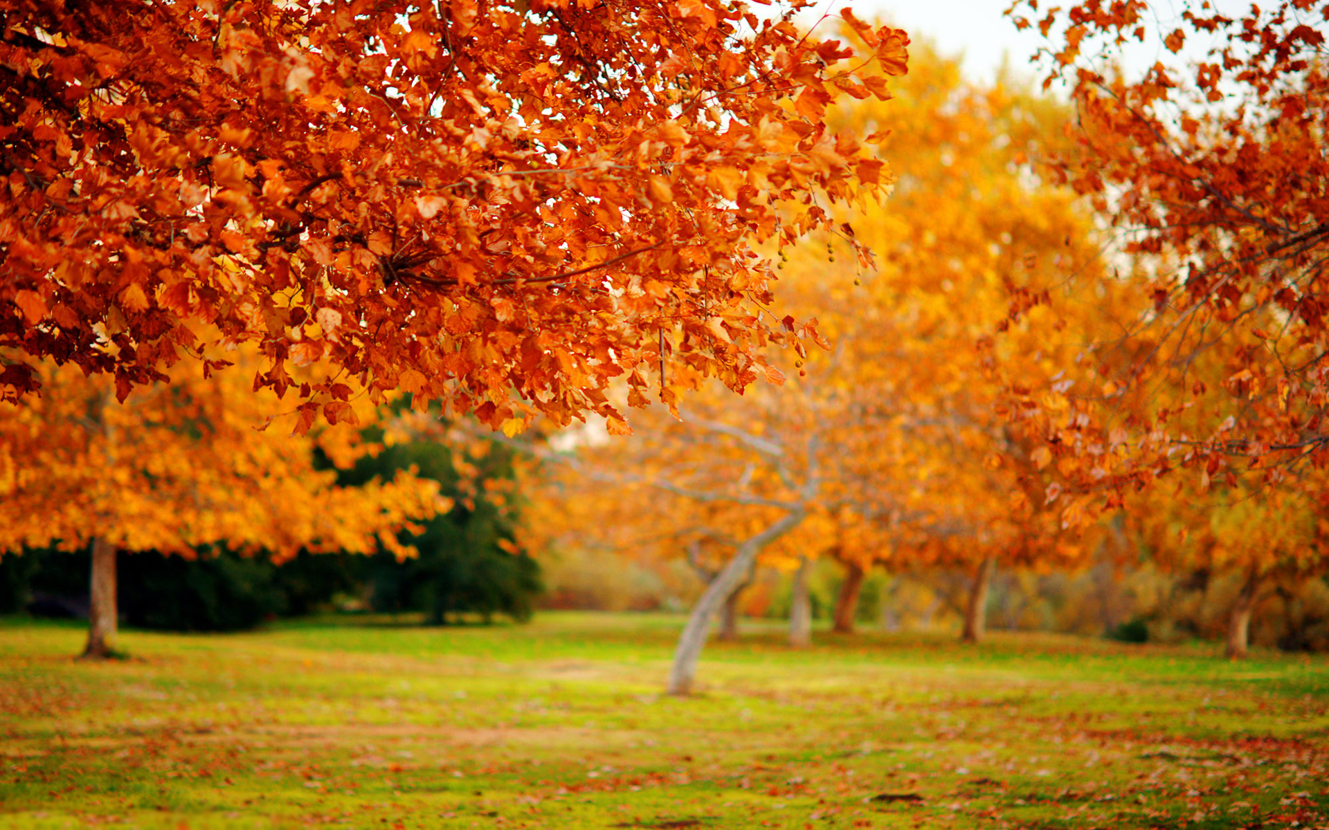fall desktop download