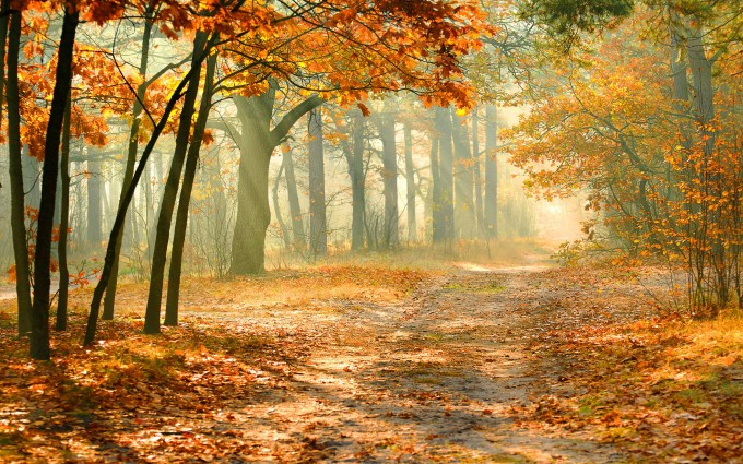 fall forest wallpaper morning