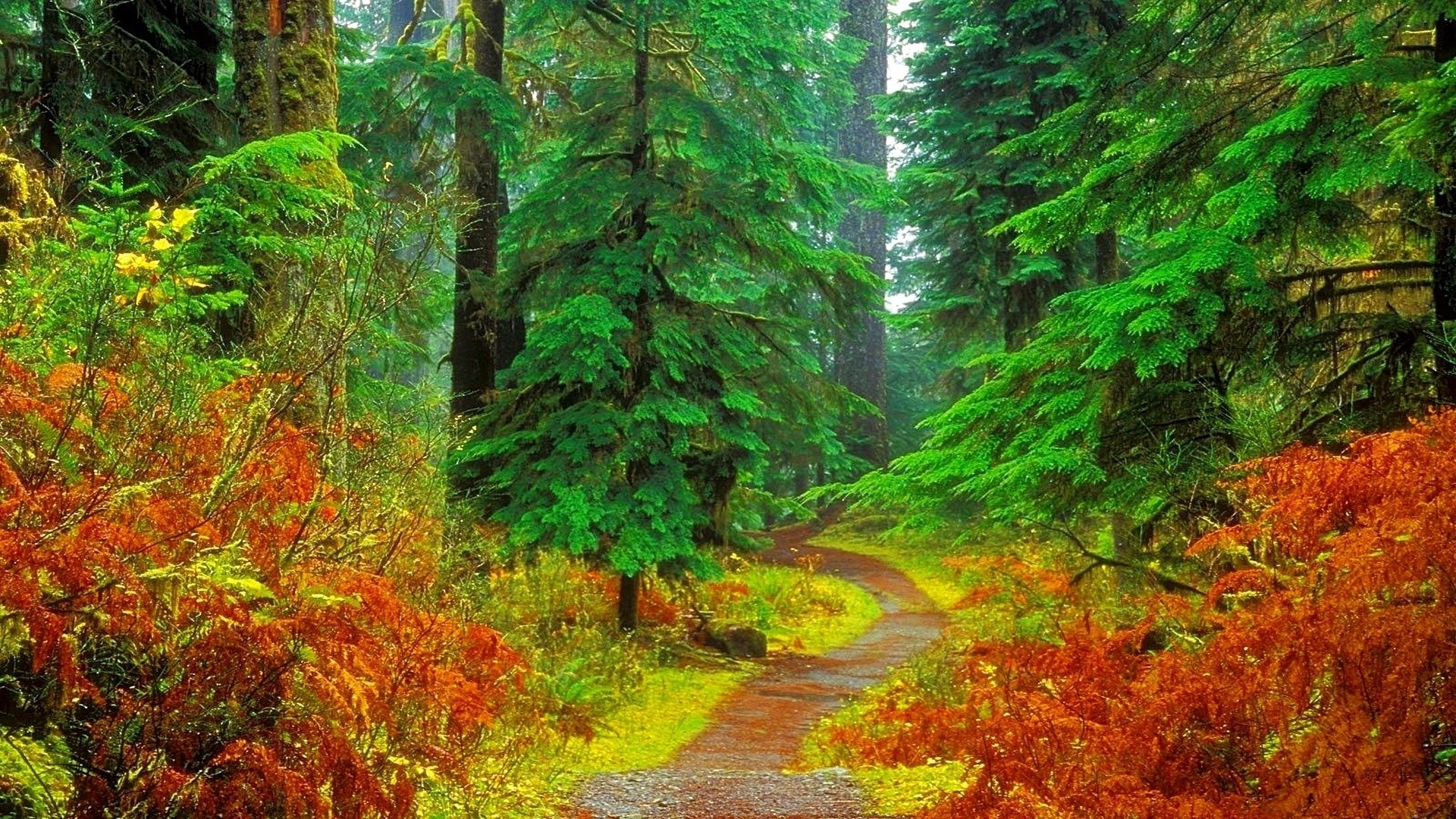 fall forest wallpaper stunning