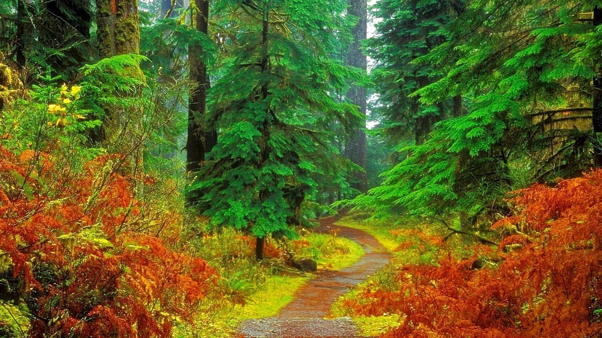 fall forest wallpaper stunning