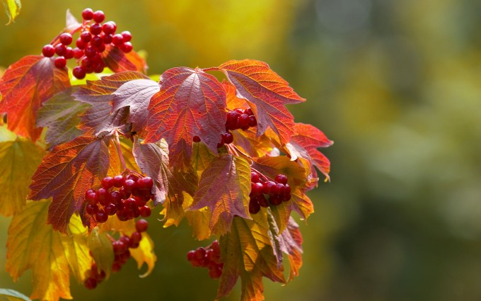 fall images download