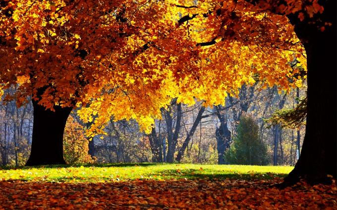 fall images for desktop