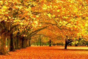 fall images wallpaper hd