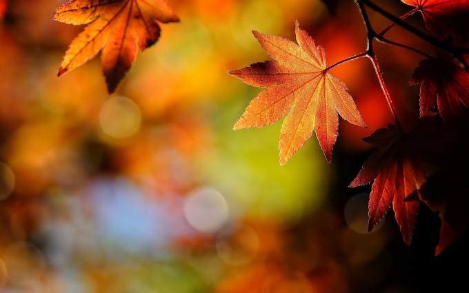 fall leaves wallpaper hd