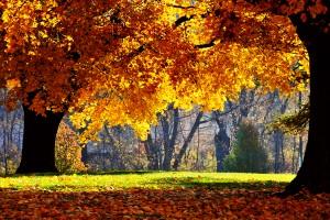 fall photos free