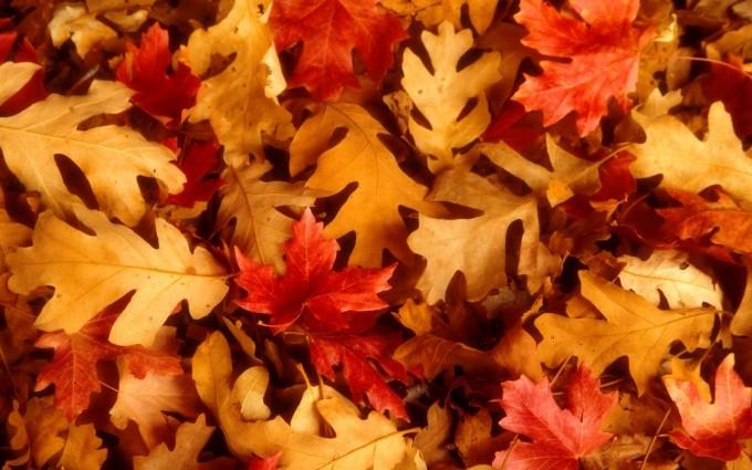 fall scenery hd