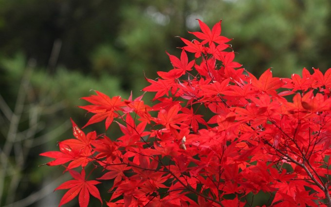 fall scenery red