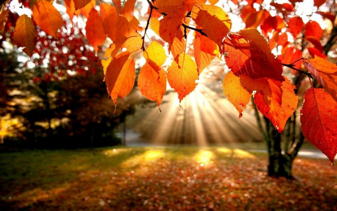 fall sunshine wallpaper