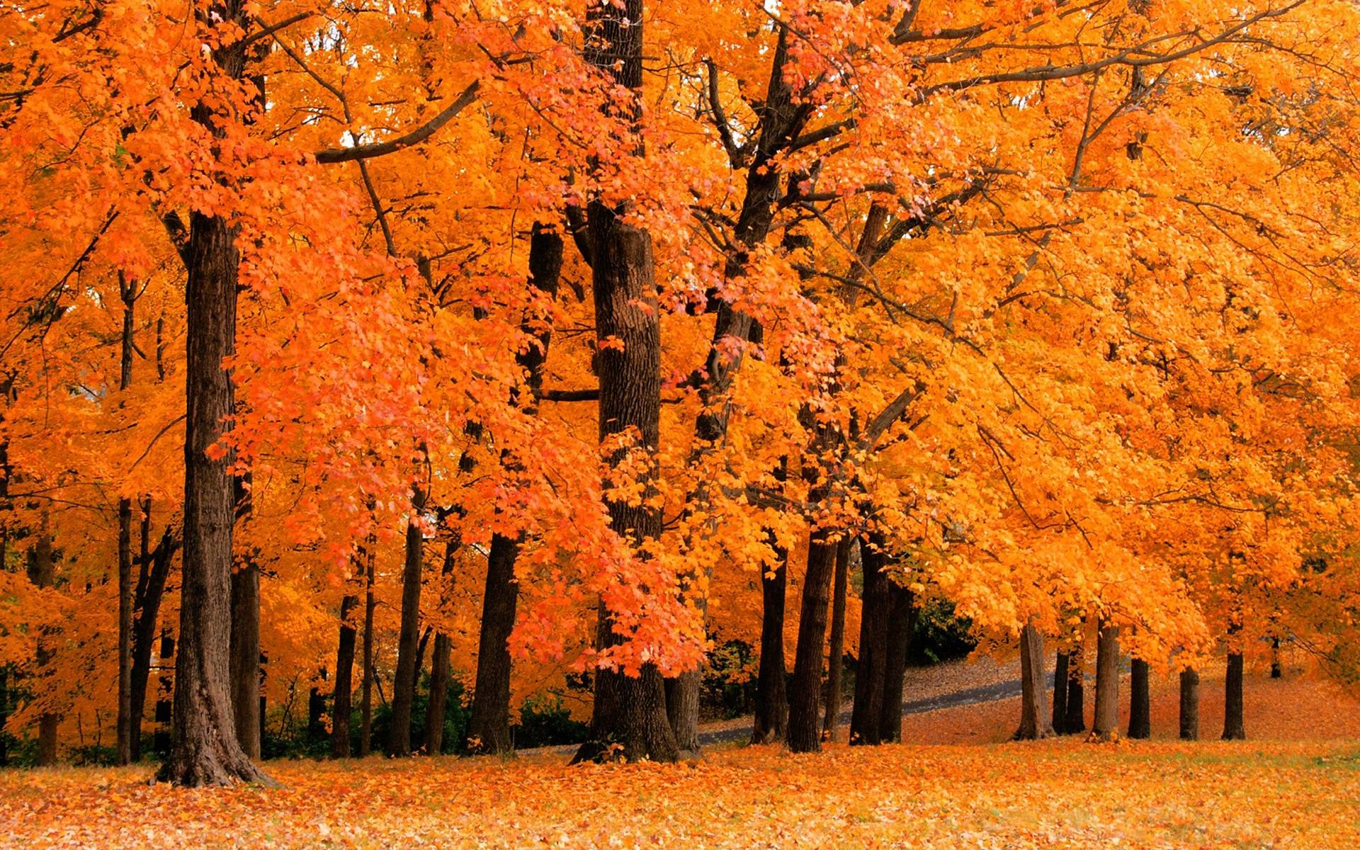 fall trees images hd