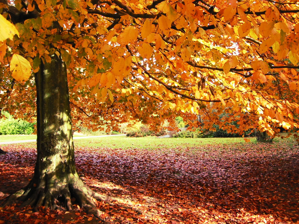 fall wallpaper backgrounds