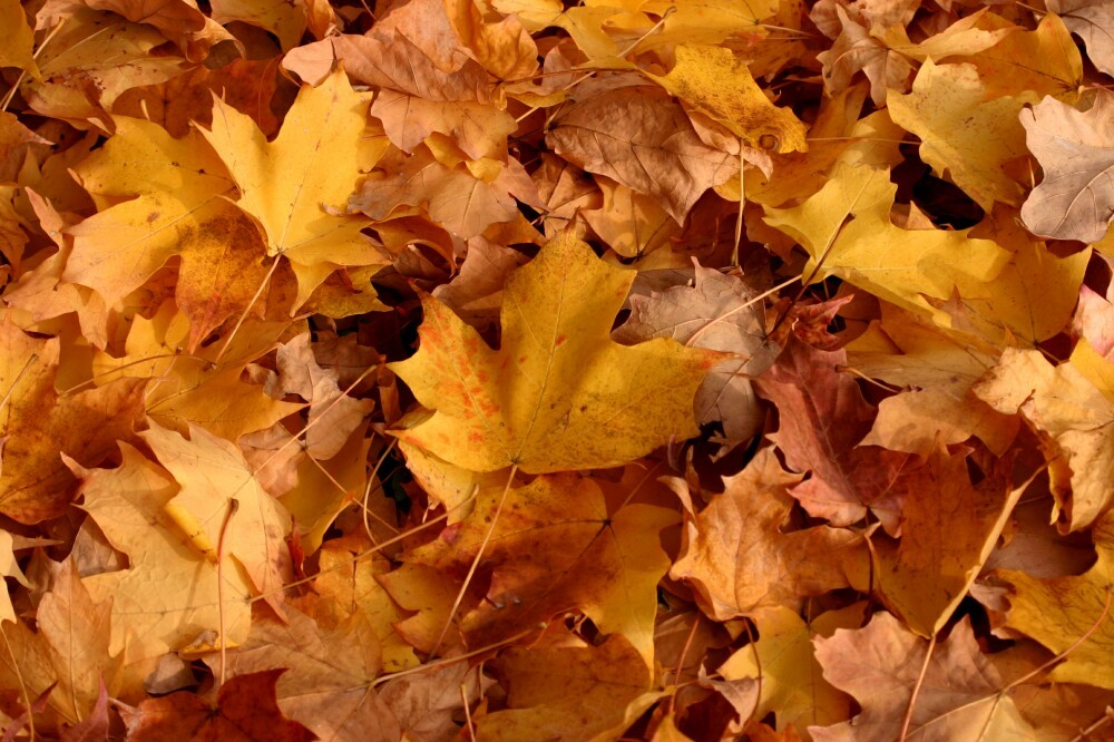 fall wallpaper leaves download