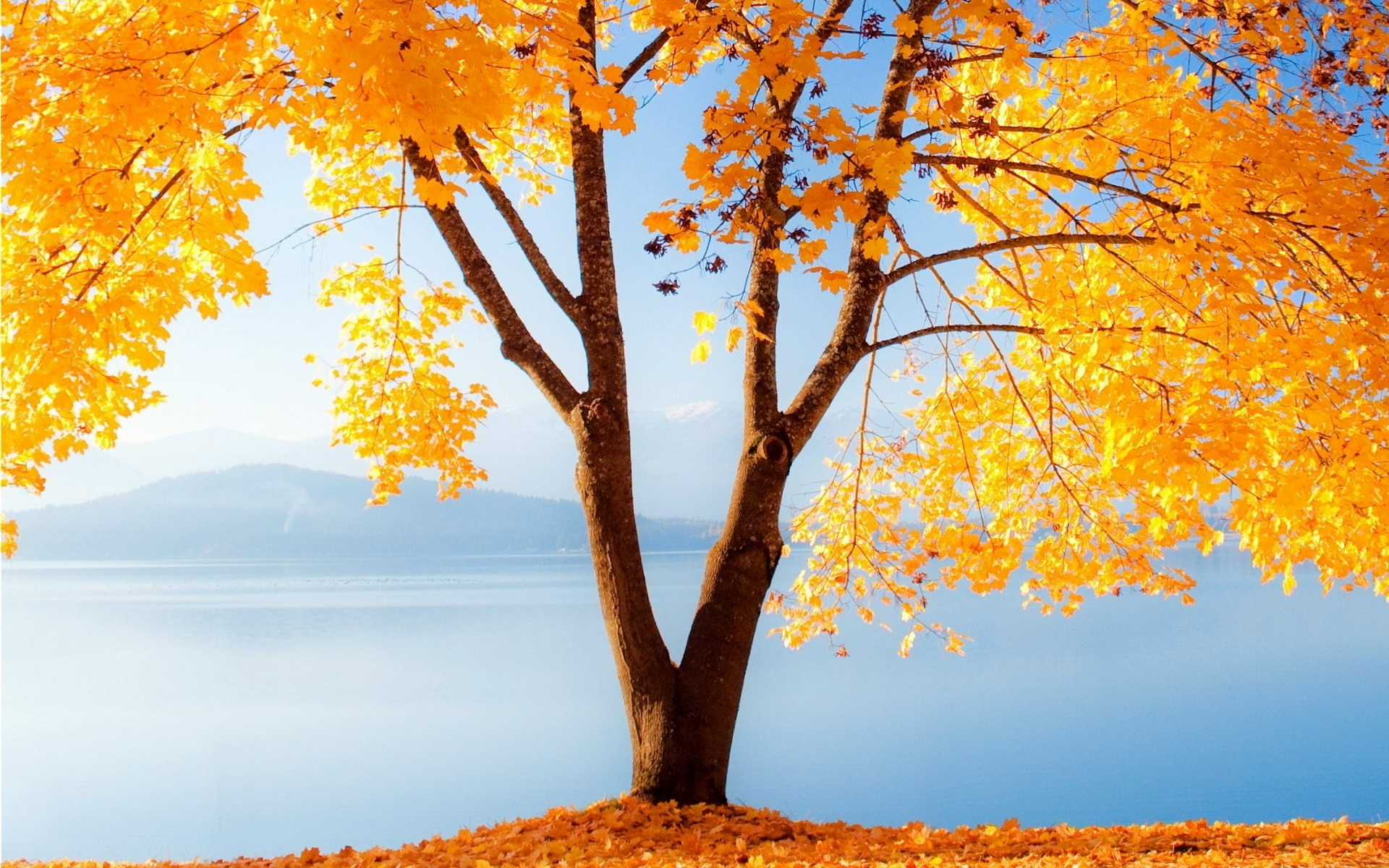 Fall Wallpapers Free