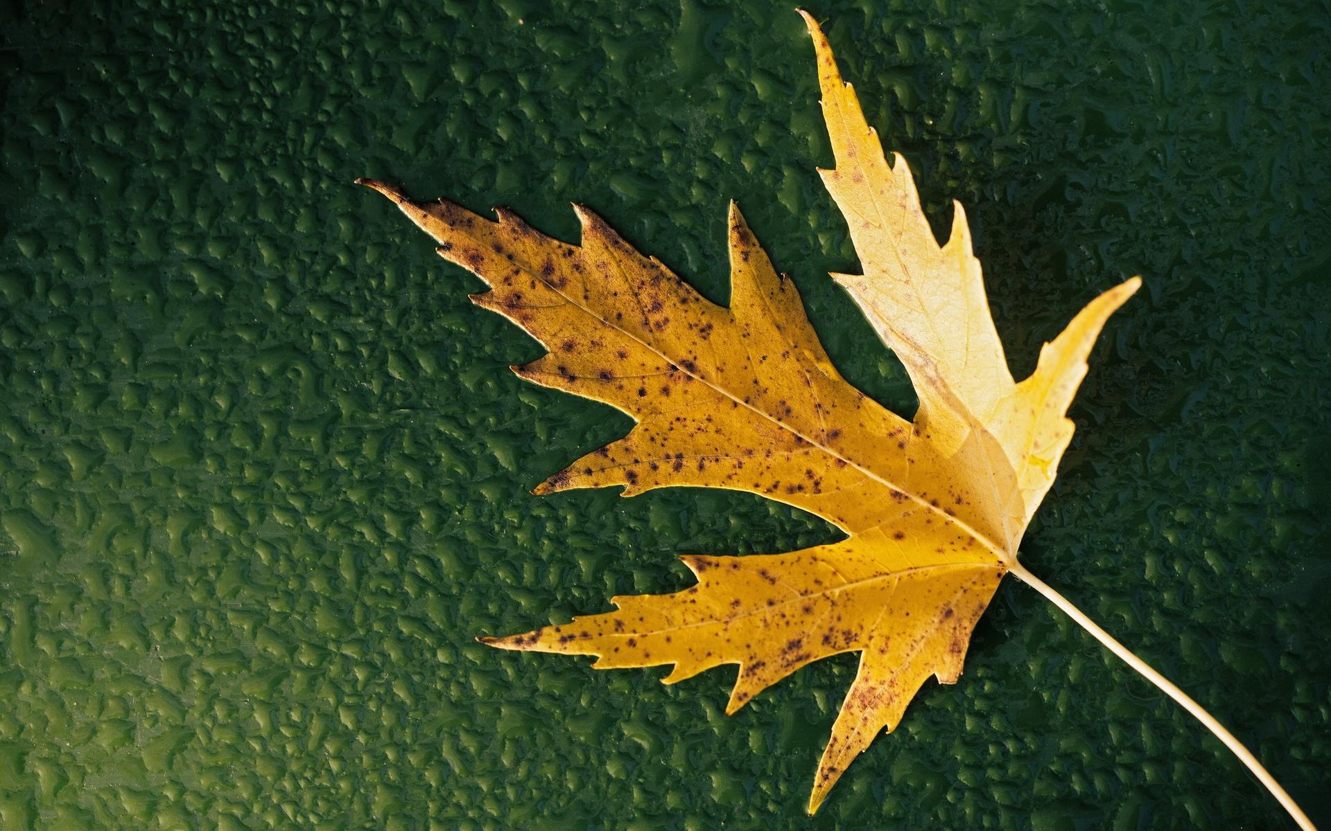 falling leaves wallpaper