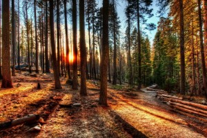 fantastic forest sunset