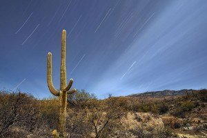 fantastic saguaro wallpaper