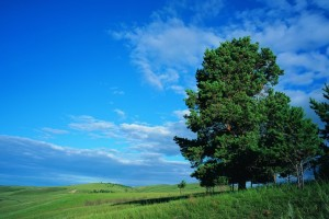 fantastic tree pictures