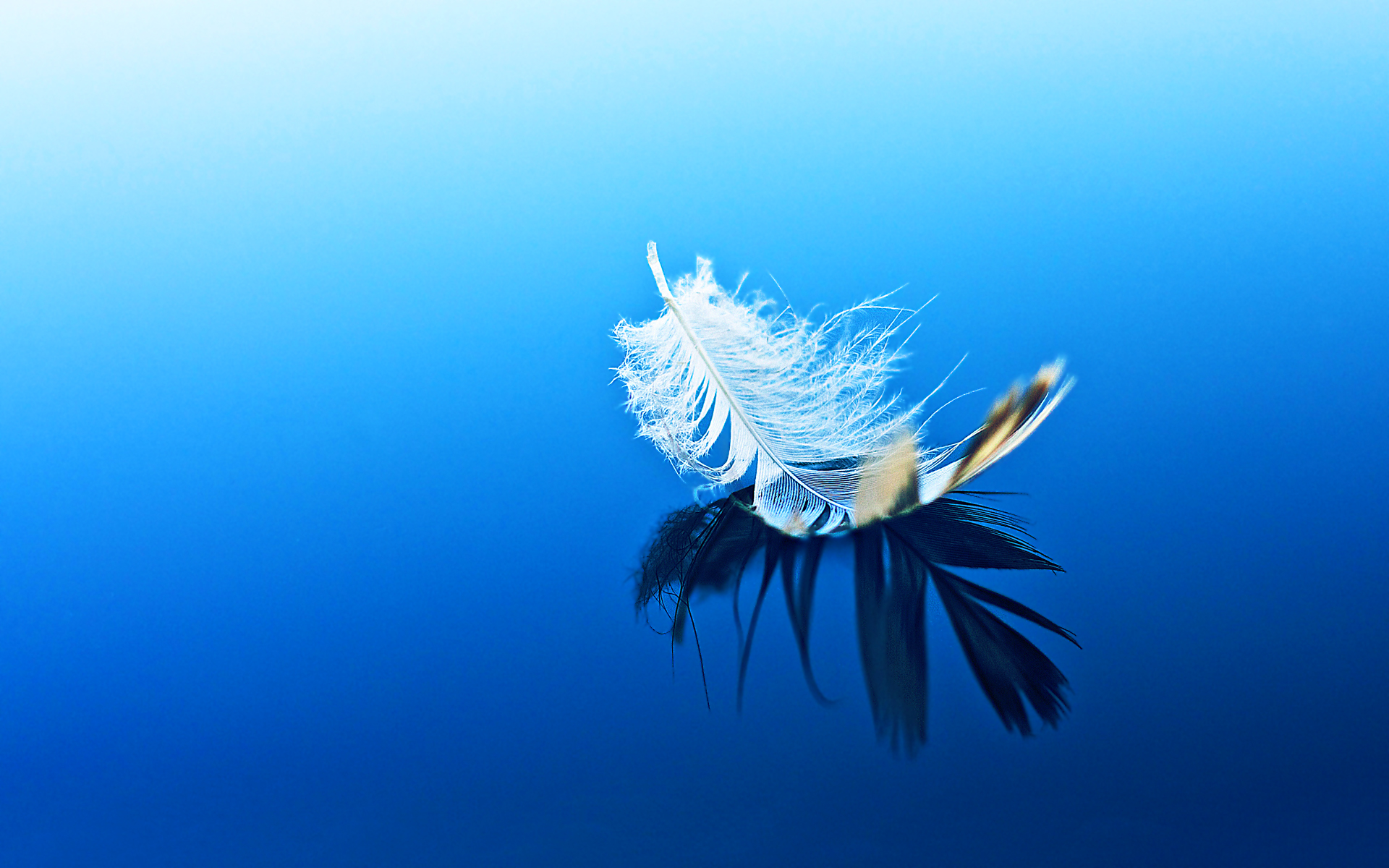 Feather Cool Background - HD Desktop Wallpapers