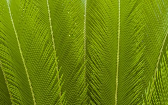 fern images