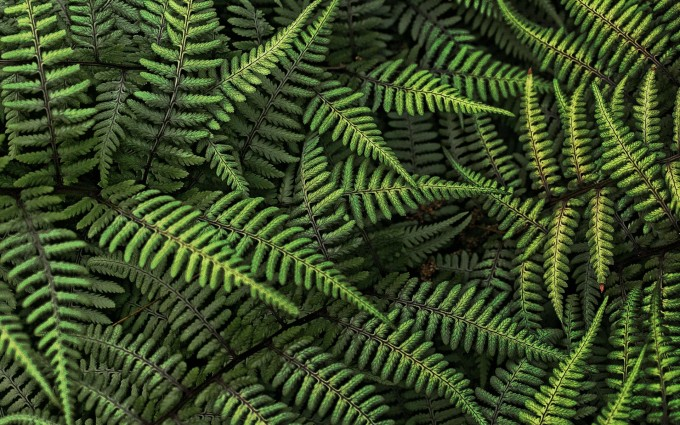 ferns pictures