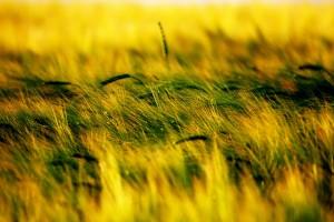 field backgrounds