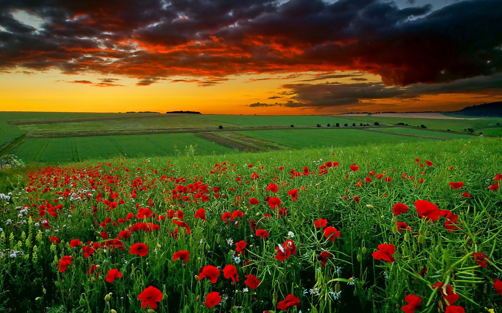 field sunset hd
