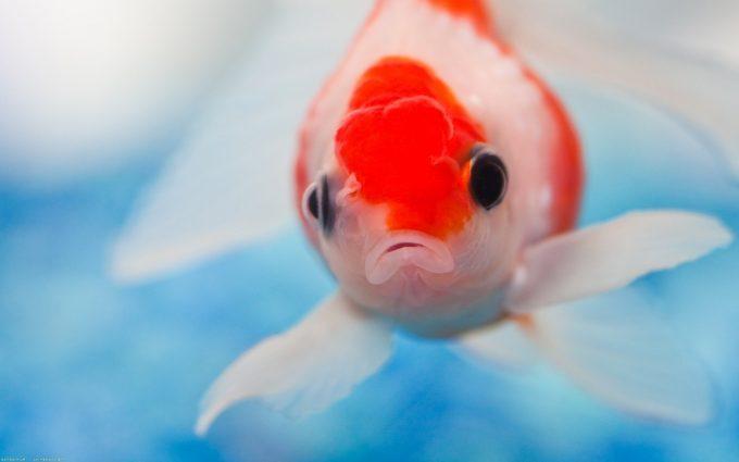 fish beautiful images
