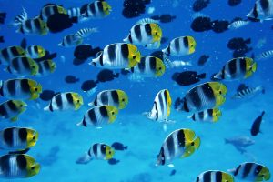 fish live wallpaper free download