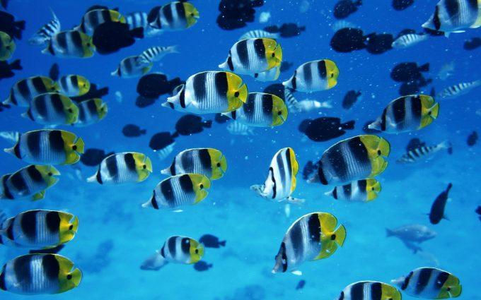 fish live wallpaper free download