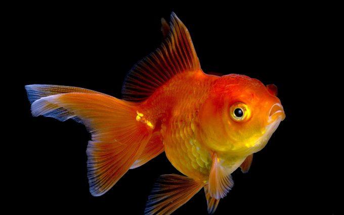 fish wallpaper download