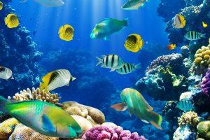 fish wallpaper live