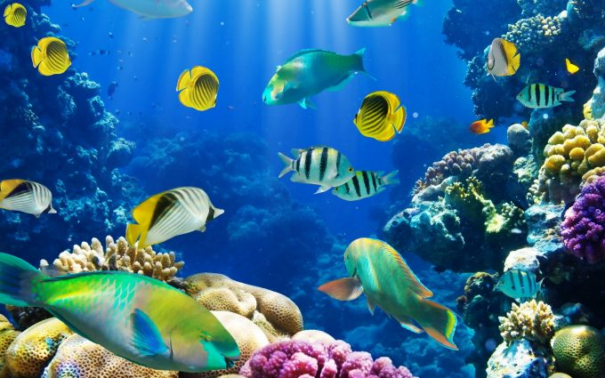 Fish Wallpaper Live - HD Desktop Wallpapers