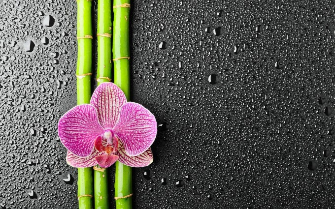 flower bamboo background