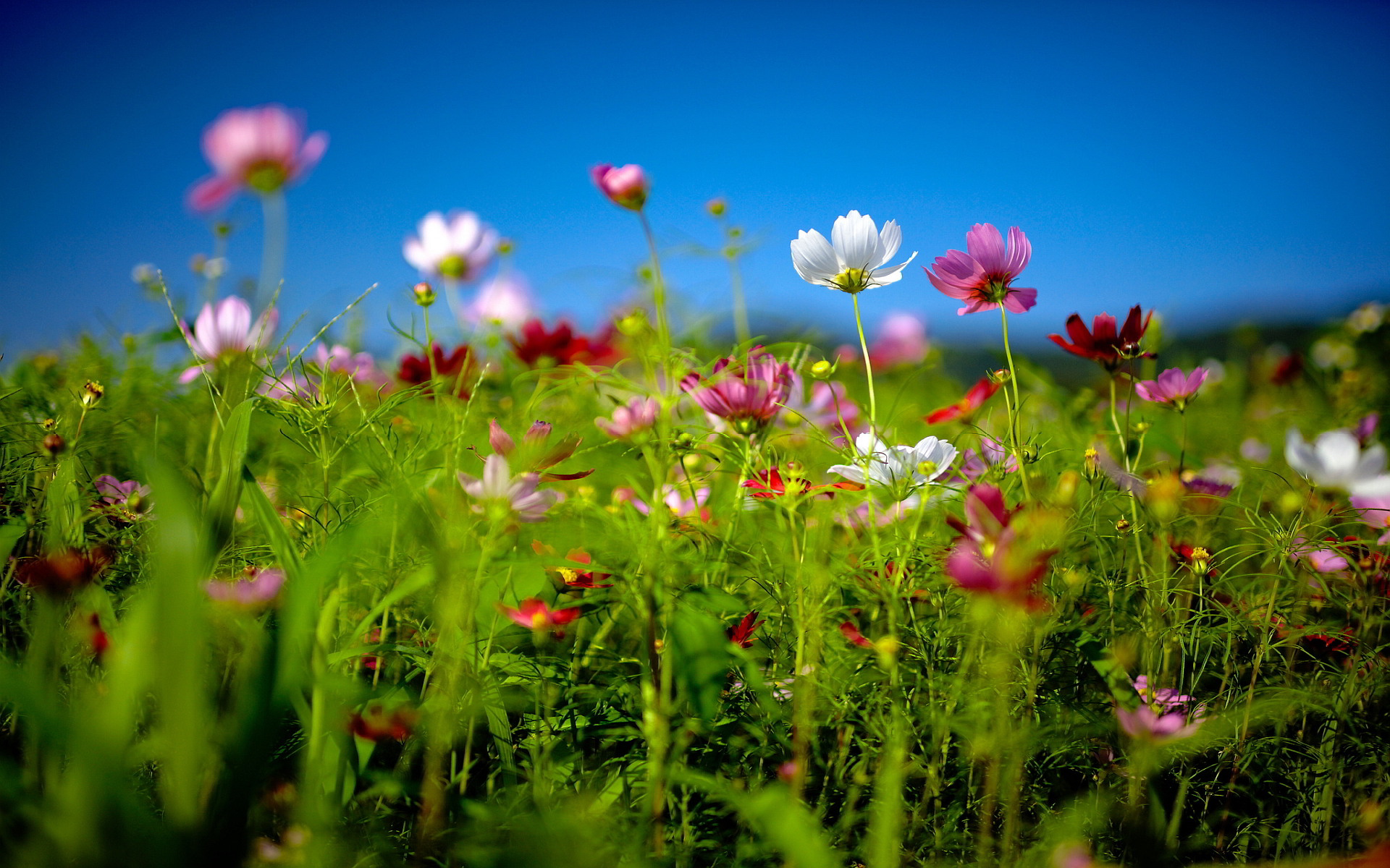 flower field summer