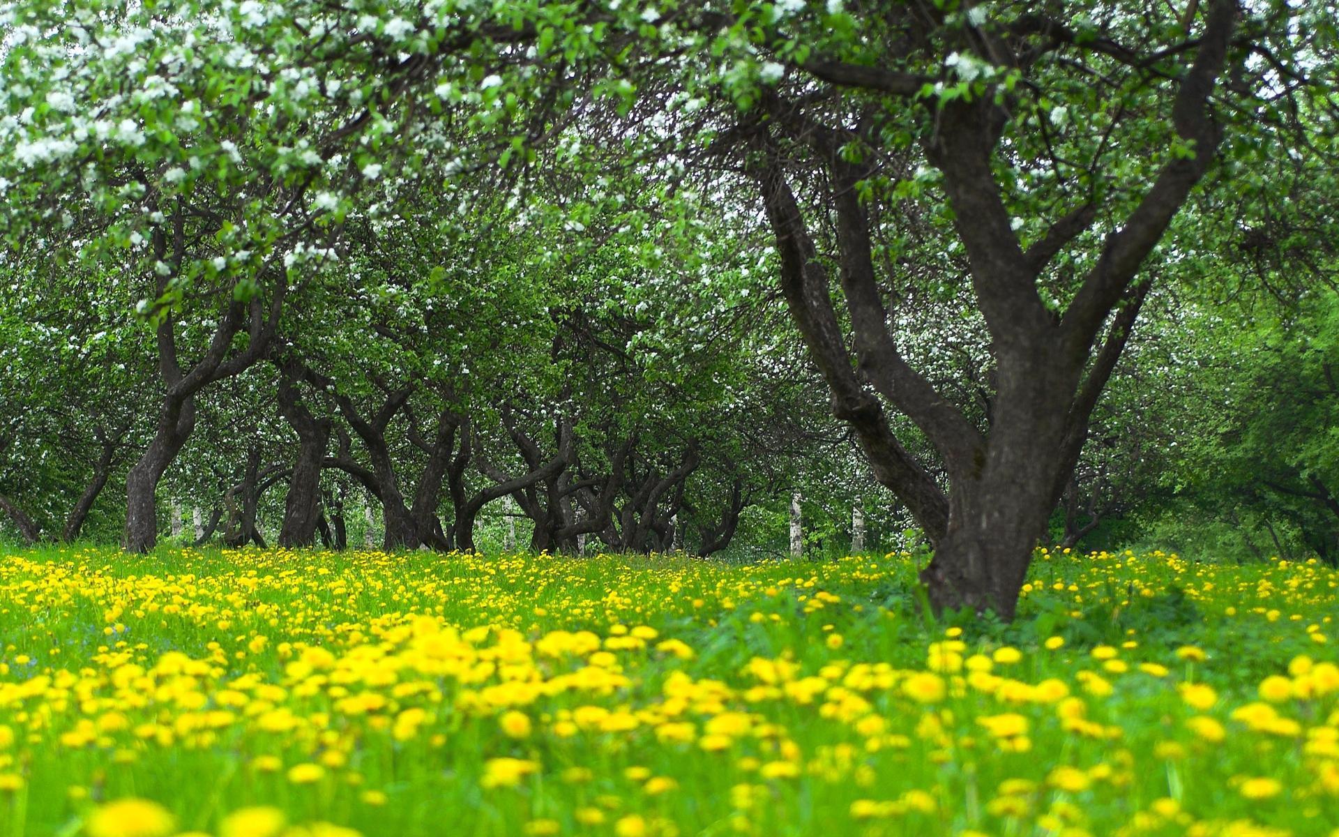 Flower Garden Wallpaper flower garden wallpaper - hd desktop wallpapers | 4k hd