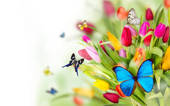 flowers butterflies wallpaper