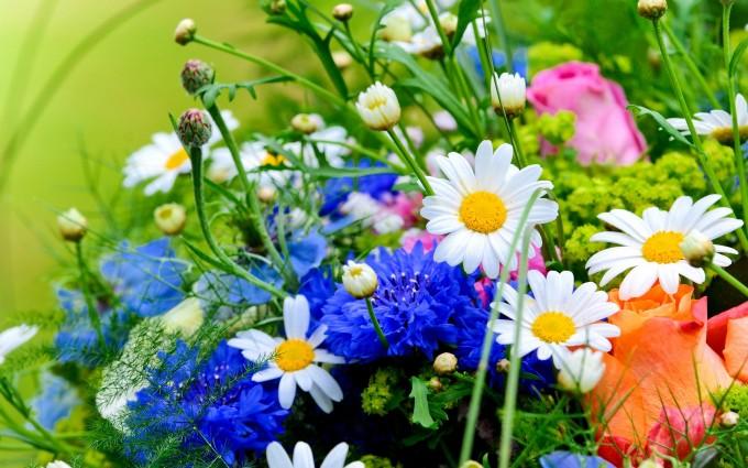 flowers herbs