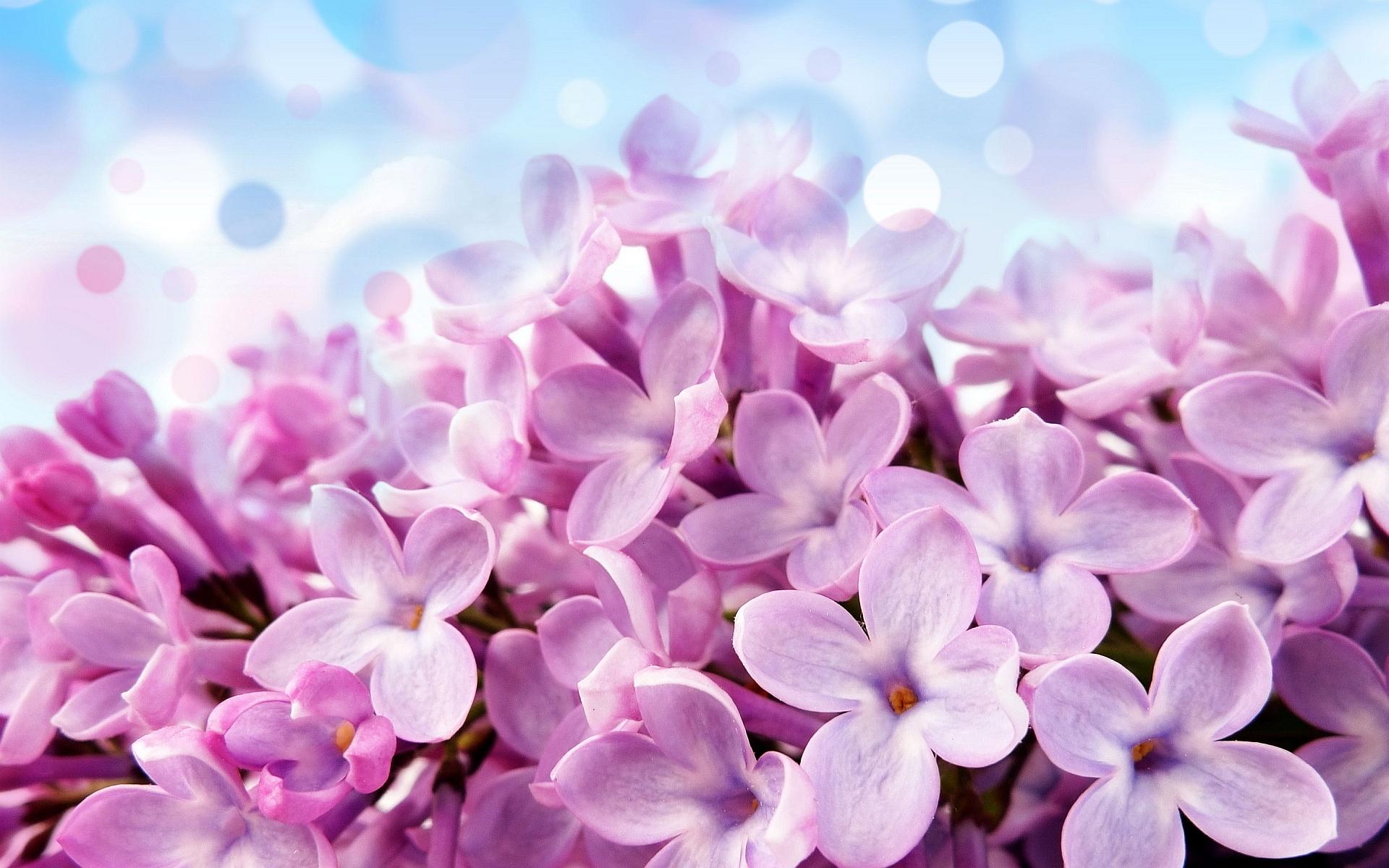 flowers pink hd