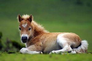 foal wallpaper