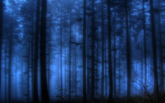 fog forest wallpaper
