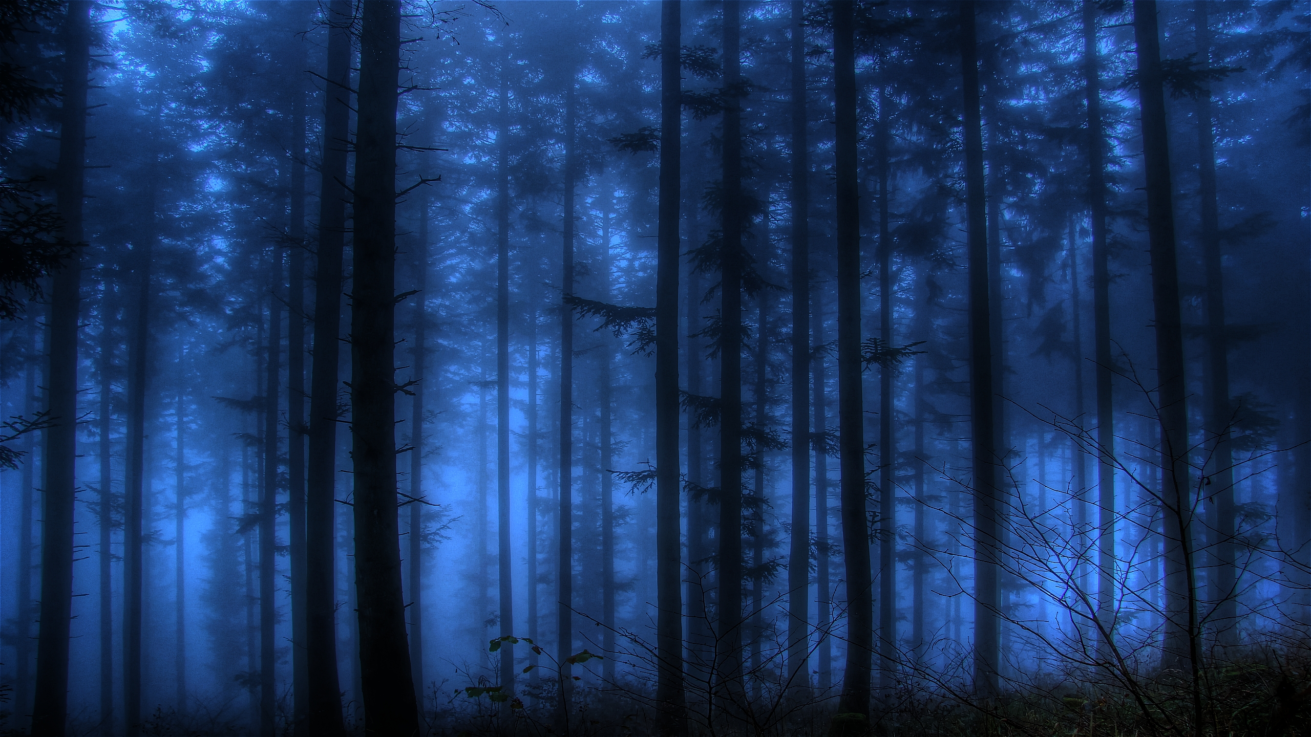 fog forest wallpaper