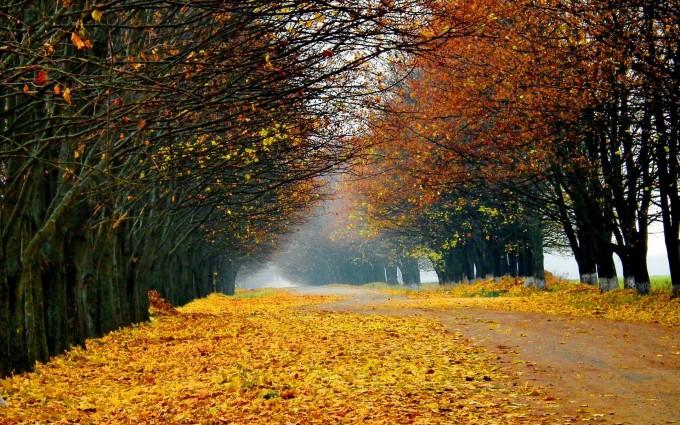 foliage wallpaper autumn hd