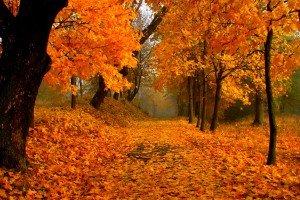 foliage wallpaper orange