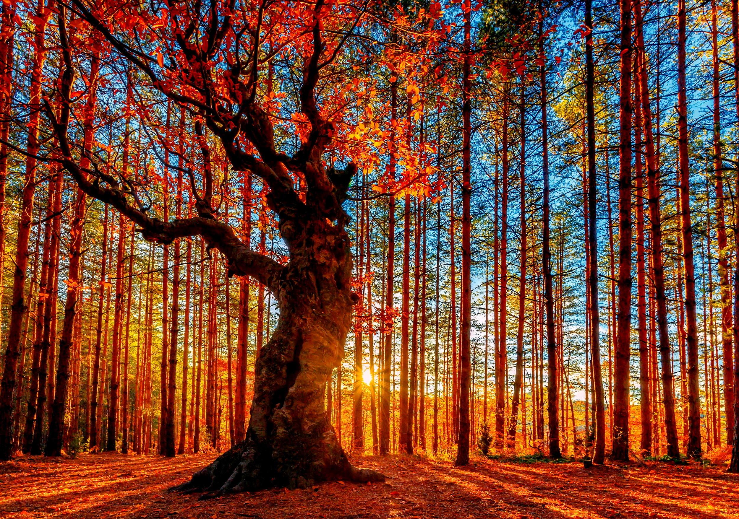 foliage wallpaper trees