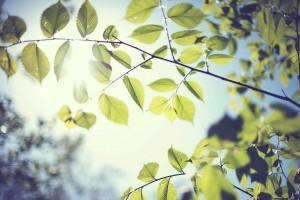 foliage wallpaper widescreen