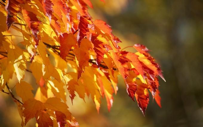 foliage wallpaper yellow hd