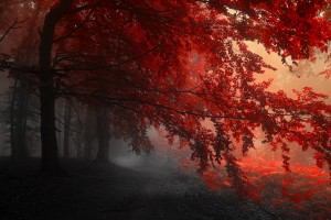 forest autumn red