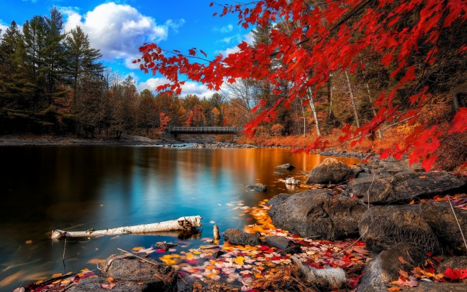 forest autumn scenery