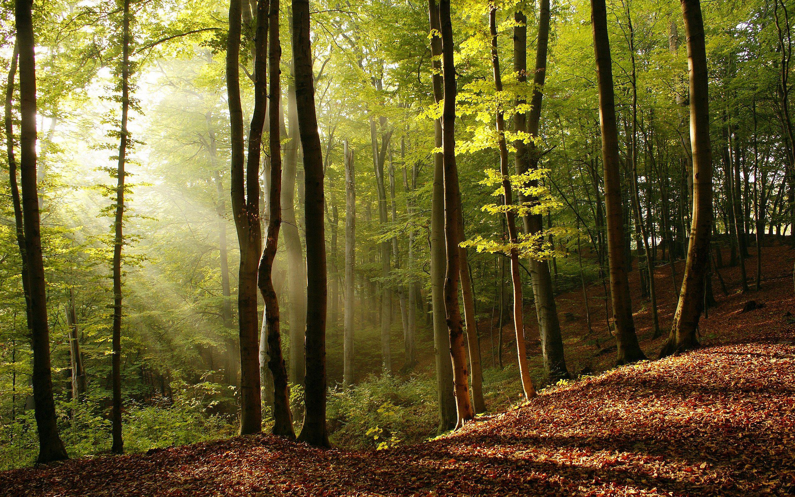 forest autumn wallpaper